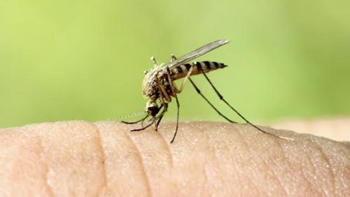 dengu-fever